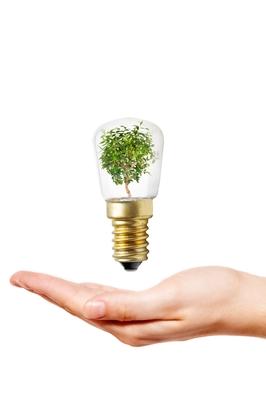 lamp ecologisch